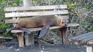 Arriving on an uninhabited island in Galapagos, our first sight was ...